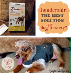 Thundershirt for Dogs product review