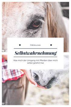 Pferde - Selbstwahrnehmung