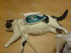Iron cat  #cat #pet #vet #gentle