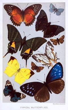 Artfully Musing: Butterfly Images for Your Art – Fourth and Last Set 8 of 9 By Laura Carson