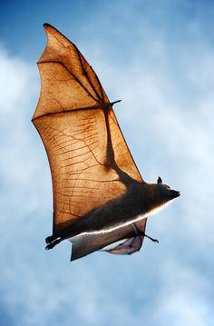 Bat wings and fingers :) visit https://www.facebook.com/simplyBeautifulnature