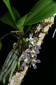 Beautiful Flowers, Orchid Flower Arrangements, Beautiful Orchids, Plants, Planting Flowers, Plant Projects, Miniature Orchids, Orchid Terrarium, Fruit Plants