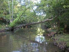 #2208-657 ACRES+/- RECREATION/HUNTING/INVETMENT-NORTH CENTRAL ARKANSAS-NEAR SITKA-OZARK MTS. CABIN,WELL,ELECTRIC POWER, PONDS, CREEKS, SPRINGS, WILDLIFE FOOD PLOTS, MOSTLY WOODED, DEER STANDS, OPEN AREAS, ATV TRAILS-IDEAL HUNTING CLUB, FAMILY RECREATION PROPERTY OR INVESTMENT. FOR PIRVATE TOUR & DETAILS, CONTACT LISTING BROKER TERRY WEST 870-919-4235 in Sitka AR