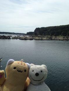 クマ散歩:三浦・岩礁のみちに品行方正なクマ出没 (宮川湾 Miyagawa Bay) The Bear took a walk along Miura Reef!♪☆(^O^)/  #品行方正#Bear#湾
