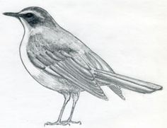 How To Draw A Bird--excellent step-by-step.  Naturalism