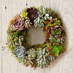 Mixed Succulent Wreath #williamssonoma