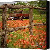 Texas wildflowers wagon fence