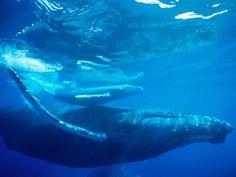 Animales Mamiferos Del Mar images