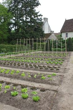 Easy layout for a vegetable garden