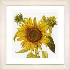 Vintage Botanical No. 36W by Zhee Singer Framed Giclee Print Fine Wall Art
