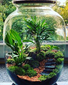 Bottle Garden, Plant Life, Plants, Cool Plants, Planting Flowers, Indoor Water Garden, Beautiful Terrariums, Indoor Garden, Diy Garden
