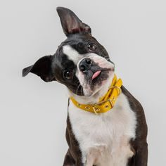 Mustard Yellow + Brass All Weather Dog Collar // Buckle Collar // Canvas Dog Collar – Classic dog collar – Dog Supplies Dog Training Methods, Basic Dog Training, Dog Training Techniques, Training Dogs, Puppy Obedience Training, Positive Dog Training, Easiest Dogs To Train, Rescue Dogs, Animal Rescue