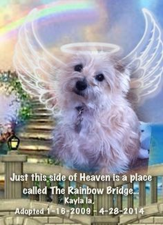 Forever in my heart.  My dear Casey & Chipper..   Miss you both soooo much