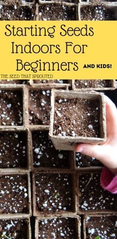 Start seeds indoors for beginners. Cheap and easy way to start a garden, and the kids can help. Healthy Fruits And Vegetables, Different Vegetables, Starting A Garden, Seed Starting, Gardening For Beginners, Gardening Tips, Backyard Farmer, Seed Packaging, Starting Seeds Indoors