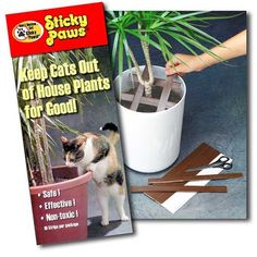 12 99 19 Stop Cats From Using Houseplants Like A Litterbox Deters Inropriate