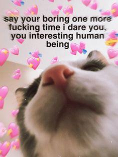 yes – Memes Crush Memes, Memes Humor, Stupid Funny Memes, Funny Relatable Memes, Flirty Memes, Wholesome Pictures, Cute Love Memes, Love Memes For Him, Response Memes