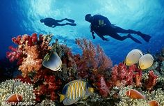 I want to go scuba diving in the coral reef sometime in my life.