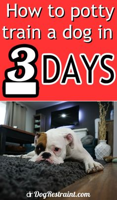 You are Viewing: Boxer Puppy Dog Potty Training Doorbells Poochie Bells. Looking to train your Boxer? Train your pet or brand-new young puppy quickly. Potty Training Girls, Training Your Puppy, Dog Training Tips, Puppy Training Schedule, Training Kit, Training Pads, Toilet Training, Training Classes, Brain Training