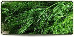 Nem is hinnéd, de ez a mindennapi növény a legjobb természetes inzulin Herbs, Herb, Medicinal Plants