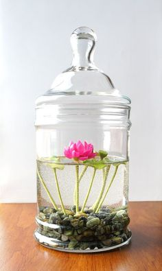 Indoor Container Gardening Miniature Pink Lotus Water Lily Terrarium - We have showcased a series of indoor plant ideas, herbs and fun beautiful ideas and take son flower pots we hope you will enjoy and find inspiring. Indoor Water Garden, Indoor Plants, Water Gardens, Hanging Plants, Water Garden Plants, Succulents Garden, Planting Flowers, Succulent Plants, Terrarium Plants