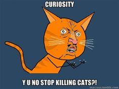 Poor cats ;-;