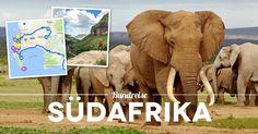 Road Trip Südafrika Reisetipps: 3 Wochen Südafrika Rundreise von Johannesburg nach Kapstadt. Erfahrungsbericht, Reisetipps, Sehenswürdigkeiten und Route.