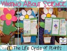 Blog post with LOTS of creative and fun ideas for getting kids writing about science while teaching about the life cycle of plants. Also includes FREE printable anchor charts for photosynthesis and parts of a plant.