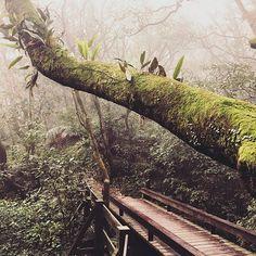 【vint5678】さんのInstagramの写真をピンしています。《探幽 #wildlife #goout #taiwantrip #natureaddict #nature_seekers #outdoorfun #landscape #forest #exploringtheglobe #passionpassport #山 #instadaily #trekking #散歩 #道 #林 #instagram》