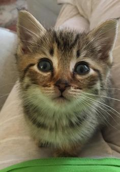 I dont think our new kitten could be any cuter by squarecats cats kitten catsonweb cute adorable funny sleepy animals nature kitty cutie ca