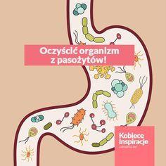 Wystarczą dwa składniki, aby oczyścić organizm z pasożytów!