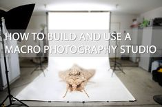 How to set up a macro / close-up photography studio for taking studio style shots of small objects, flowers, or insects. Various example setups included. http://www.discoverdigitalphotography.com/2014/how-to-build-and-use-a-macro-photography-studio/