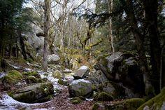 Wanderer in Wonderland posted a photo:  Proche de la Rigole du Diable, Royère-de-Vassivière, Creuse, Limousin, France.
