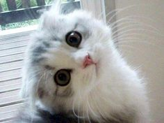 kitten eyes