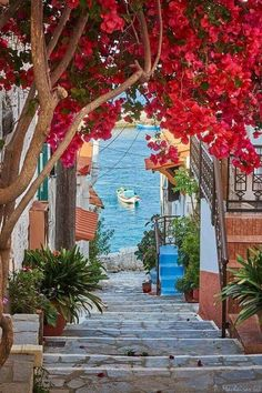 "yellowrose543: ""Image via We Heart It http://weheartit.com/entry/279253018 #flowers #Greece #village #samos #narrowstreets """