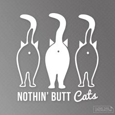 Vinyl decals for every cat lover. Weather resistant, perfect for your car, truck, laptop, mug. Get one for yourself or for Cat Lover that you know. Crazy Cat Lady, Crazy Cats, I Love Cats, Cricut Vinyl, Vinyl Decals, Cat Decals, Wall Vinyl, Cat Stickers, Cat Lover Gifts