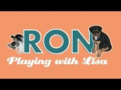 """Part 2 Ron The Rottweiler // puppy Rottie playing """"fight"""" with friendly little kitty Lisa - 2nd round! #ron #rottweiler #rottie #puppy #puppies #dog #doggy #cute #pet #pets #funny #play #playing #cat #cats #kitty #kitten #dominican republic #caribbean #fight #lisa #lissa"""