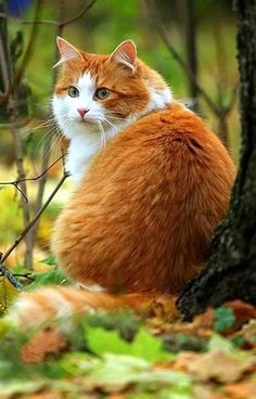 Pretty Cats, Beautiful Cats, Animals Beautiful, Cute Animals, Crazy Cats, I Love Cats, Kittens Cutest, Cats And Kittens, Animal Gato