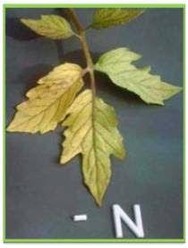 Biologia em Movimento: Nutrição Mineral e a sua Importância para as Plantas.