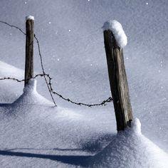 winter fence...