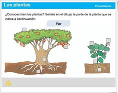 """""""Las plantas"""" (Actividad interactiva de Ciencias Naturales de Primaria) Anaya, Natural, Third Grade, Second Best, Cardboard Costume, Science Area, Plant Parts, Interactive Activities, Teaching Resources"""