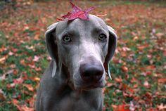 Puppy <3 Leaf