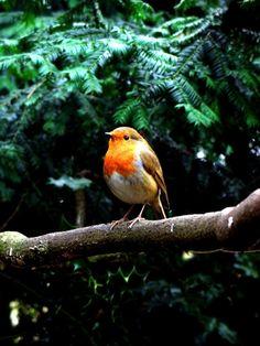 Sweet tweet! From 23 Breathtaking Photos Of British Wildlife.