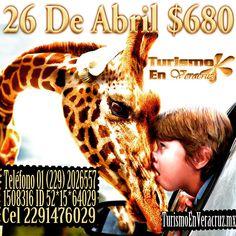 #AfricamSafari te espera este domingo http://www.turismoenveracruz.mx/category/africam-safari-2/ #Veracruz @bocadelrio_