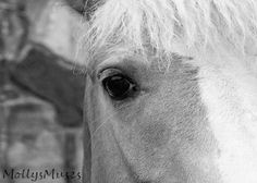 Horse Art Country Chic decor Black and White fine by MollysMuses, $25.00