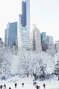Central Park, New York City in the winter. Cheap flights with www.trouvevoyage.com