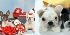 send in a pic and get a stuffed animal of your dog!
