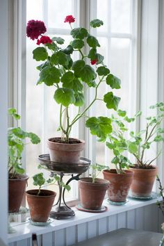 Home Garden Balcony Potted Plants 60 Ideas