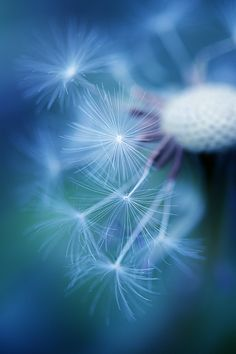 Photograph In the blue by Manabu Oda on 500px