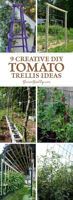 A tomato trellis is a freestanding structure usually made from wood or metal that is used to support the sprawling vines and heavy fruit of the tomato plant. Providing support for your tomato plants helps keep the plants healthy, so they can produce maxim Tomato Trellis, Vine Trellis, Tomato Cages, Tomato Garden, Garden Trellis, Trellis Ideas, Tomato Tomato, Potager Garden, Plant Trellis