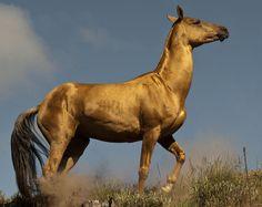 Cavalos,um dos meus animais favoritos ! Tem uma imponência indiscutivel !
